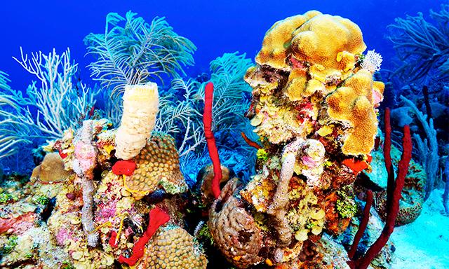 boss-underwater-adventure-RT95-mosaic