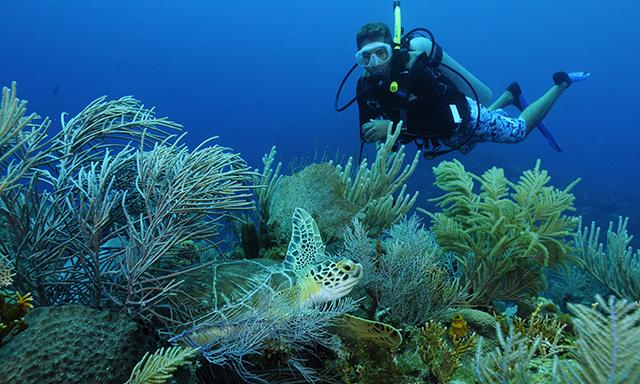 certified-2-tank-dive-RT49-mosaic